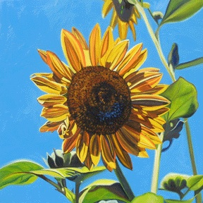SUNFLOWER #2 • 24 inches x 24 inches • ©2010 Marie Scott