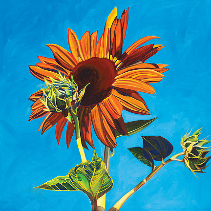 SUNFLOWER #5 • 24 inches x 24 inches • ©2010 Marie Scott